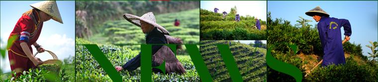 嘉润茶业加盟信息