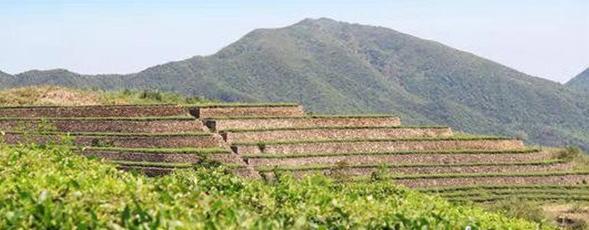 遵茶集团湄潭茶叶加工基地开建