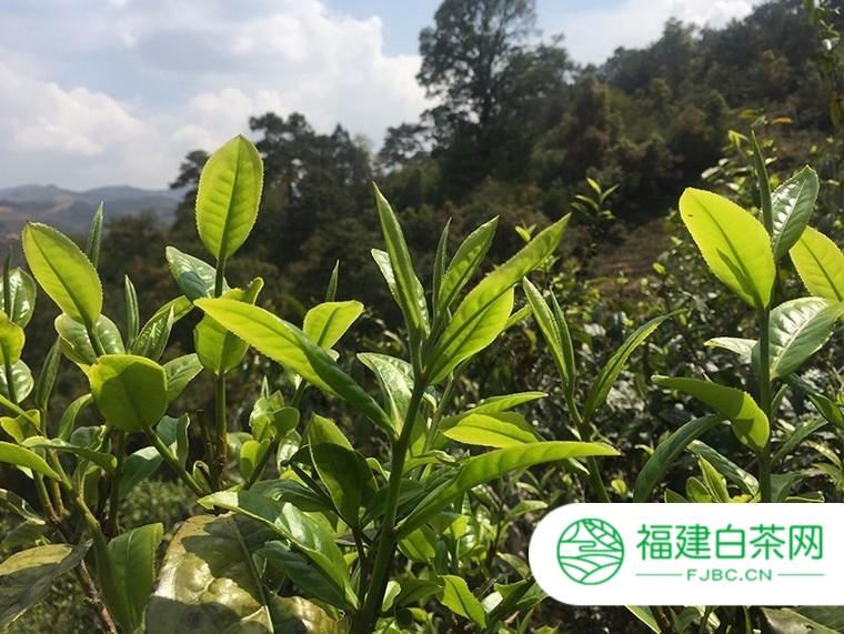 森卓茶业加盟信息