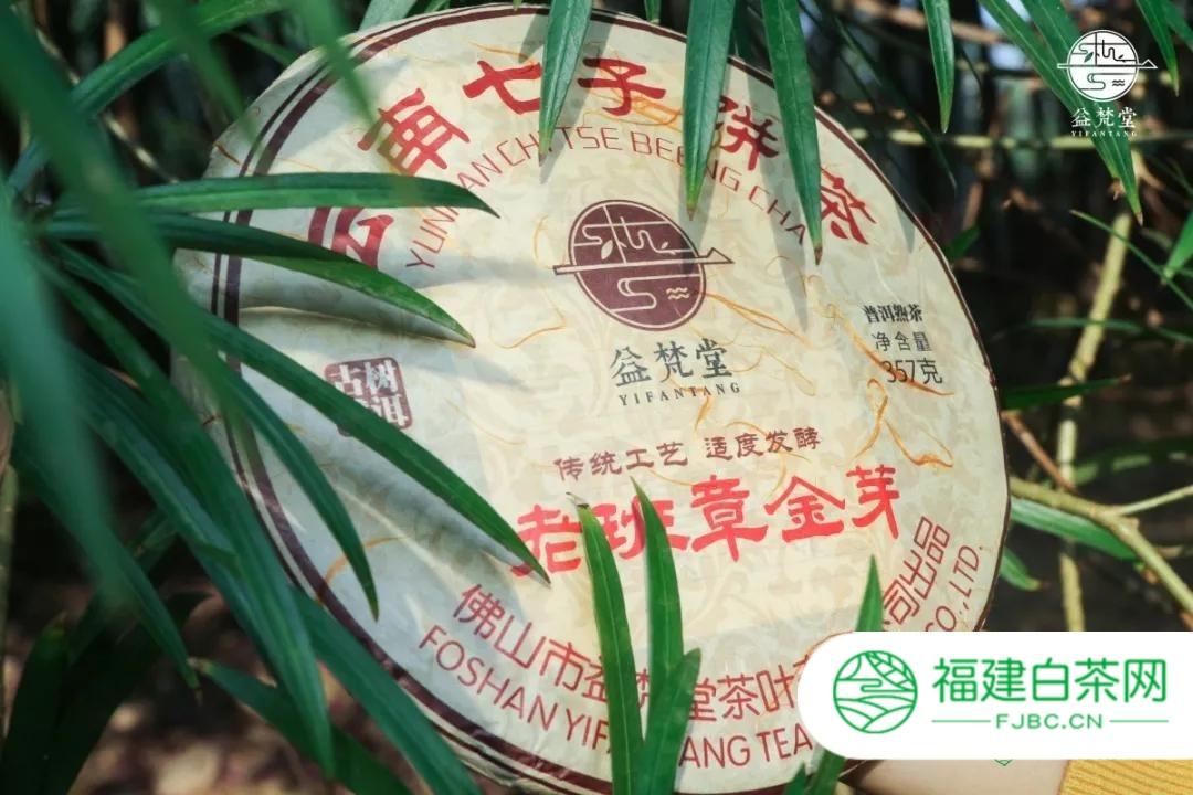 梵君说茶|熟茶不同时期的品质特点