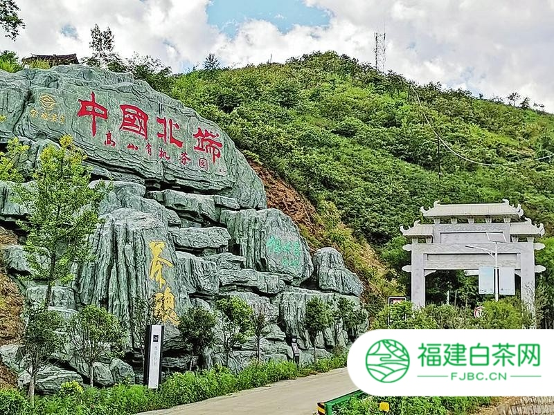 山阳县发展茶叶产业带贫增收调查