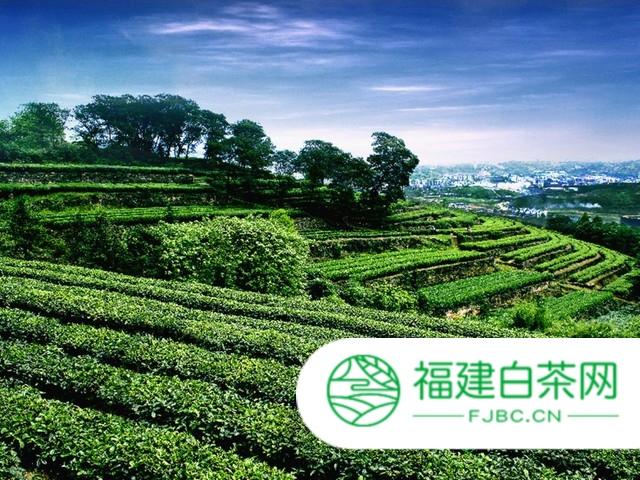 """湖北咸丰""""唐崖茶""""入选国家农产品地理标志登记保护名单"""