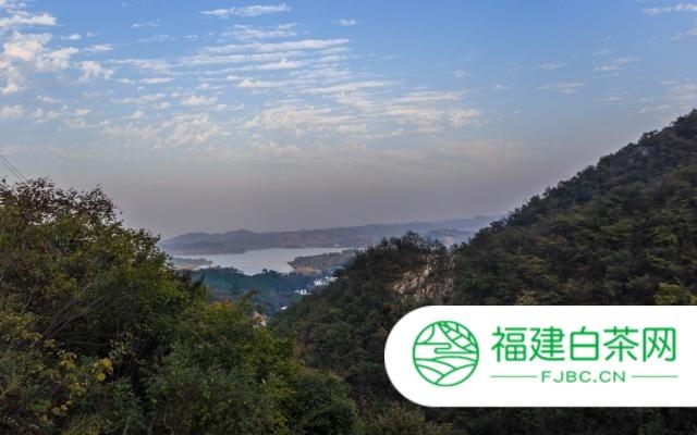 【观茶】疫情下能否催生2020信阳茶叶消费新生态?