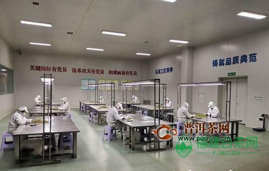 川茶集团复工后工人选茶间隔3米以上