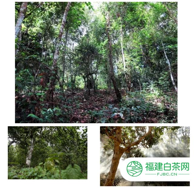 深圳茶博会:双陈广东区域招商,全面开启