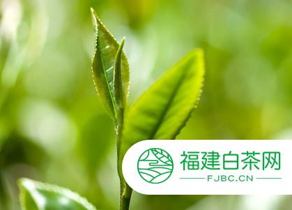 网络和枢纽基因的鉴定为改善茶园氮吸收提供了依据