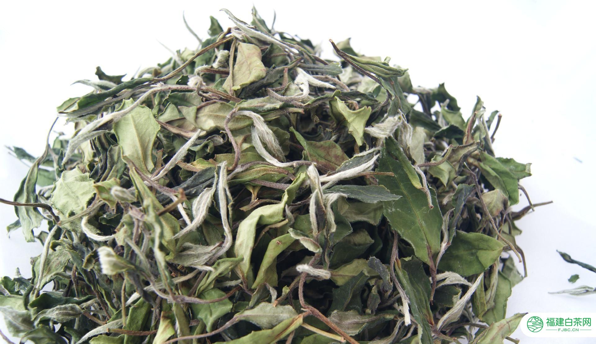 白茶是什么样的茶?一篇文章让你全面了解白茶