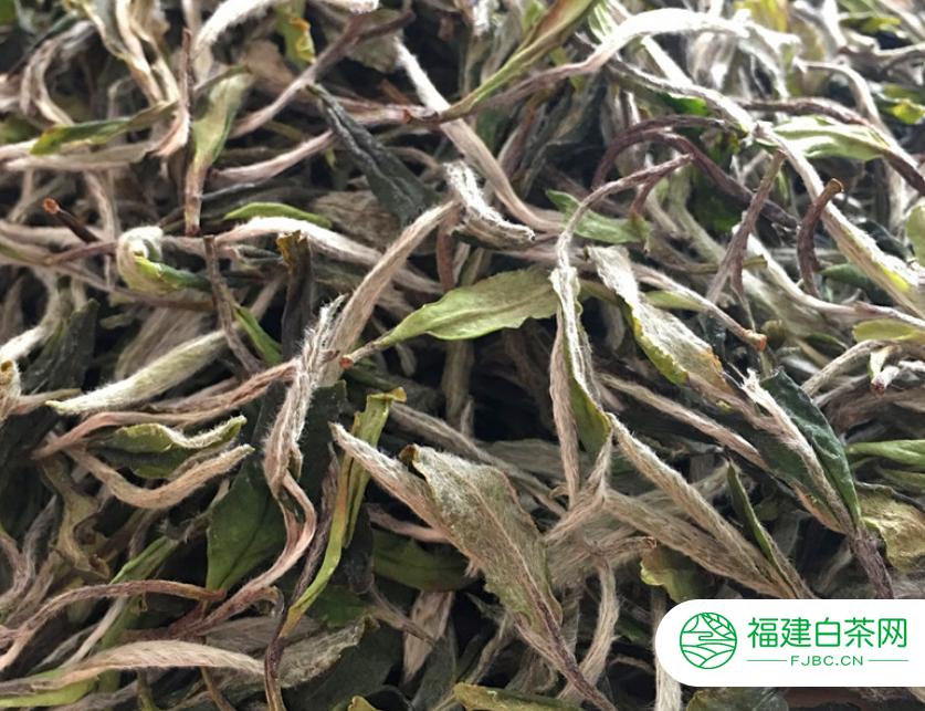名茶白茶是不是发酵茶