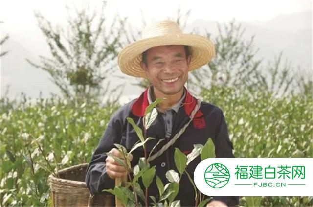 """白沙溪:依托生态优势 打造""""茶文化""""产业链"""