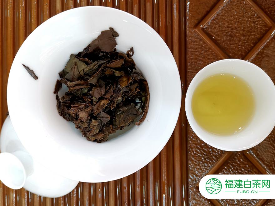 冲泡之后的福鼎白茶是什么颜色