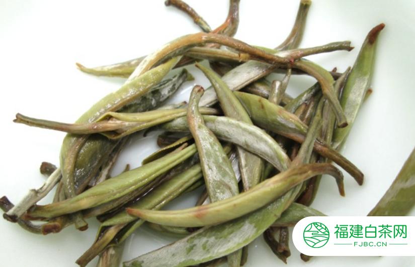 福鼎白茶自然萎凋的转色