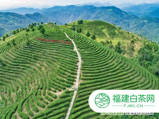 苏陕协作项目资金注入茶饮产业