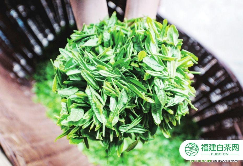 贵州茶走西北