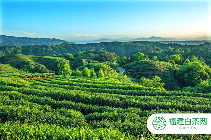 """雅安展团""""出征""""内蒙:第八届中国(呼和浩特)茶产业博览会 即将启幕"""