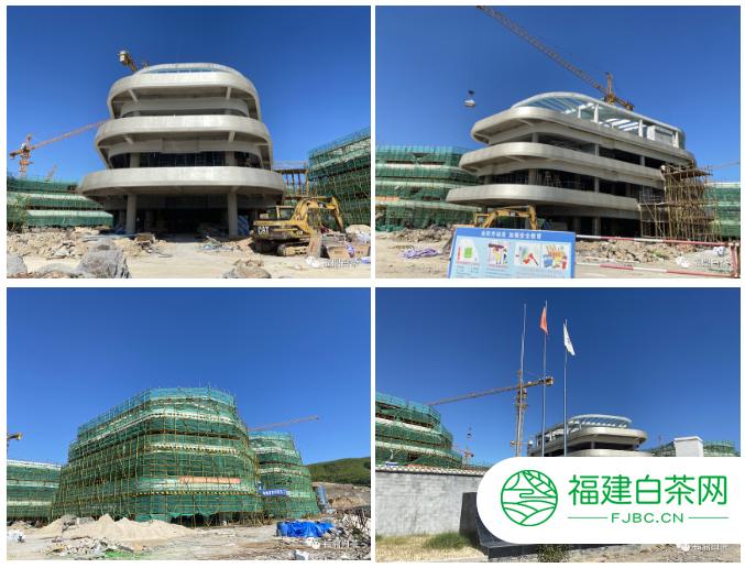 市委副书记周春海视察指导中国白茶中心建设