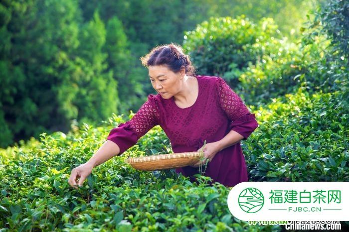 """湖北女茶人""""守艺""""44年:""""古技艺"""" 研制""""七味茶"""""""