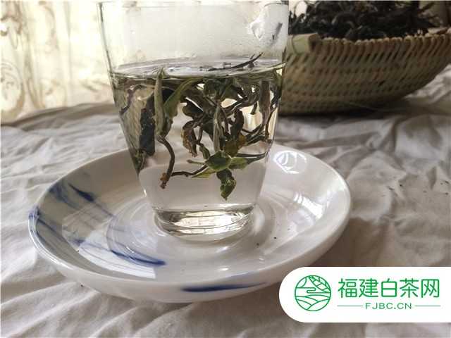白牡丹福鼎白茶的功效与作用