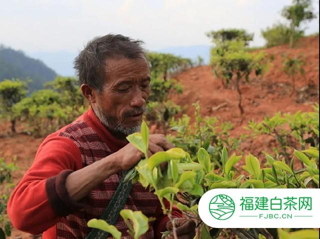 吉普号茶山黑话191:2020茶行业上半年总结