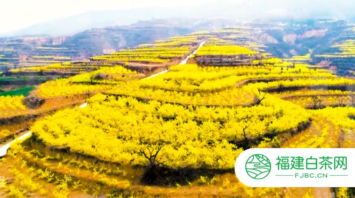 贡润祥与山西翼城政府合作打造药茶产业