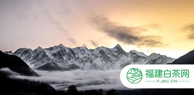 下关沱茶 :雪域高原上的世代茶缘!