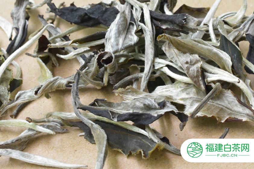 白牡丹属于发酵茶是不是