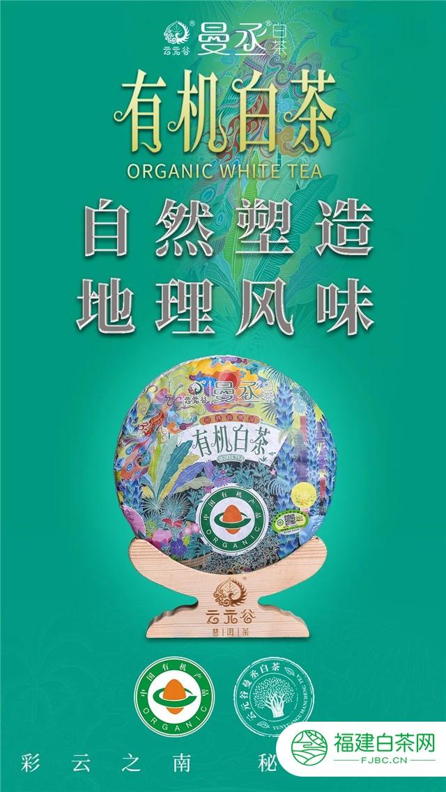 9月新品 云元谷曼丞有机白茶