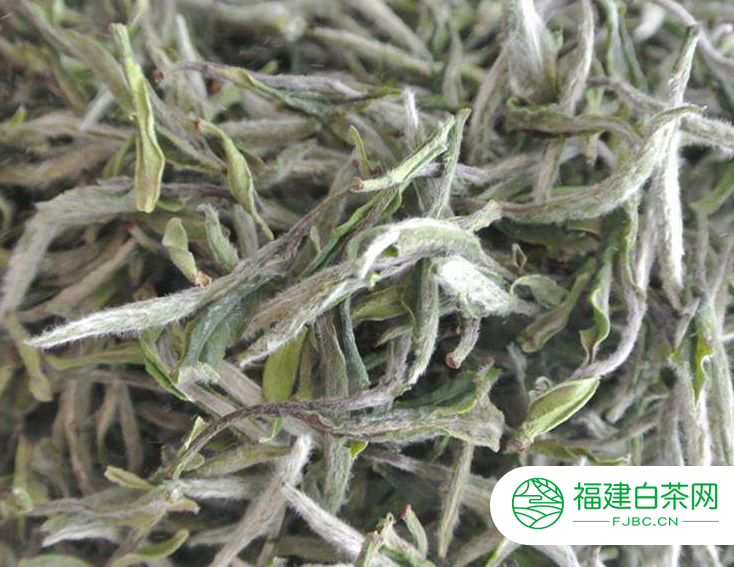 正常福鼎白茶多少钱一斤