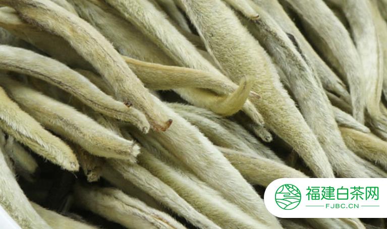 福鼎白茶保质期正常有多久