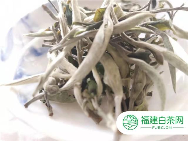 不同时期白茶的鉴别方法