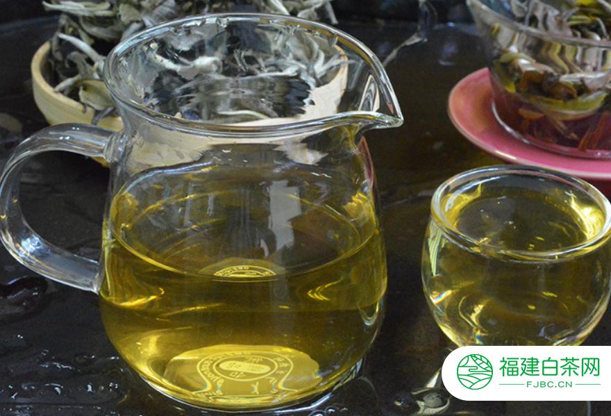 福鼎白茶是普洱茶是不是