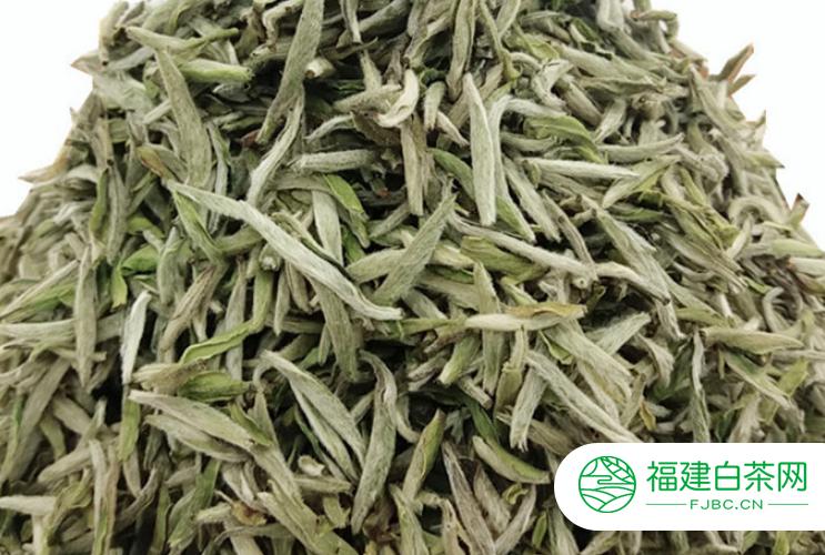 最好的白茶价格多少钱一斤