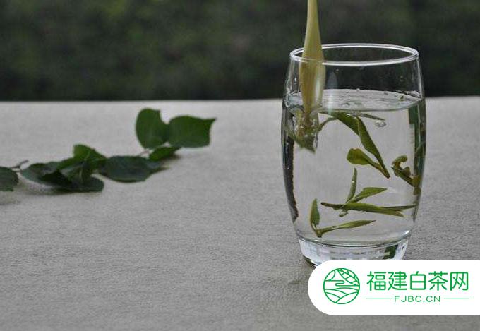 白茶的功效及其泡法