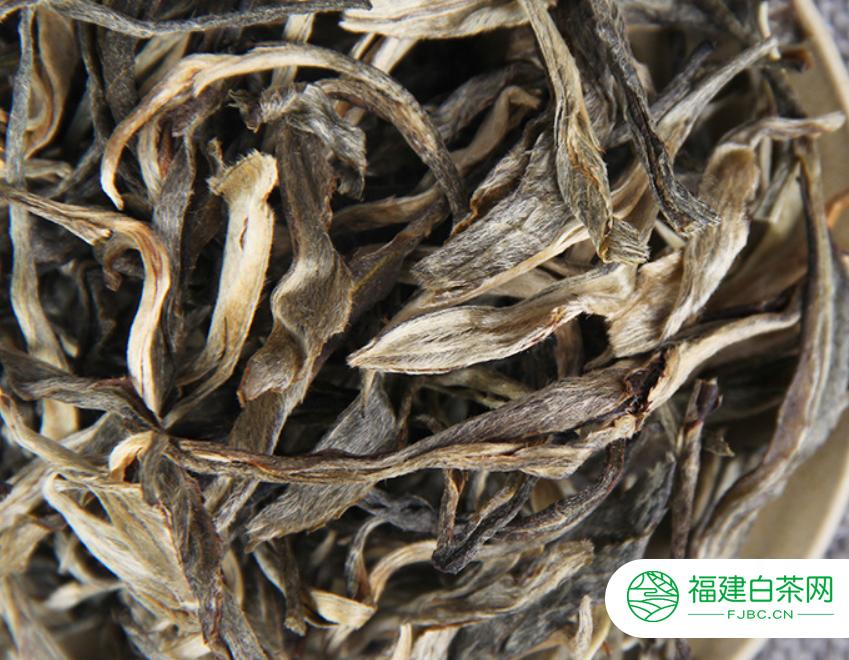 白茶珍贵的功效与作用包括