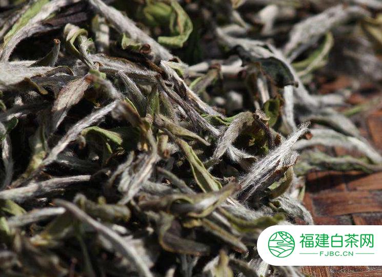 白牡丹茶是什么茶叶