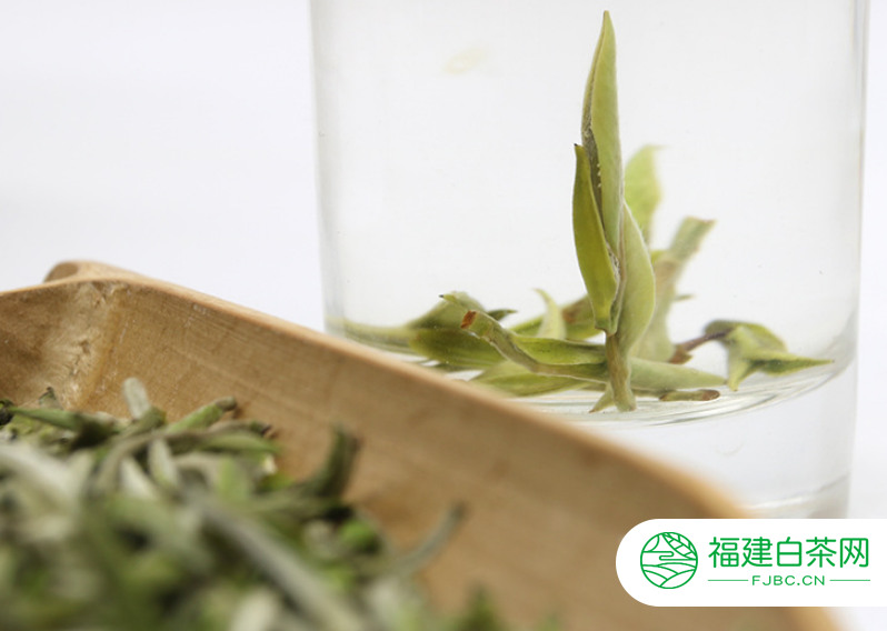 白茶的冲泡技巧简述