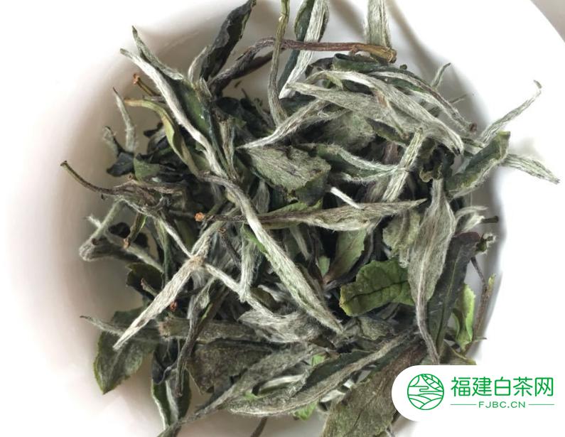 绿茶制作过程_最好的白茶是产自什么地方 | 福建白茶网