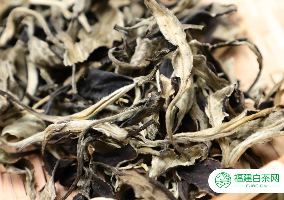 白茶的重要产地在哪里