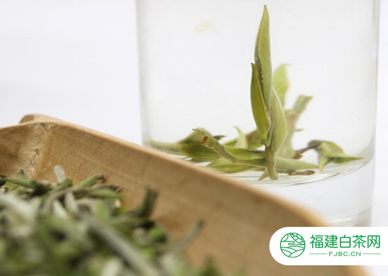 白茶是全发酵茶是不是