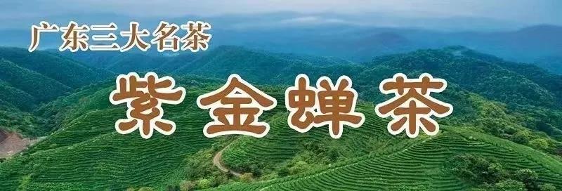 紫金蝉茶——河源高山无公害放心茶!