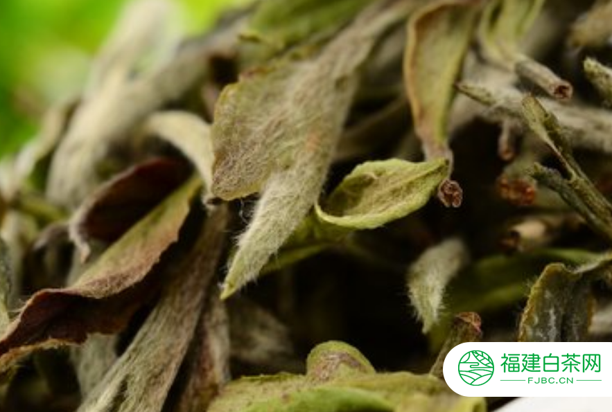 老白茶属于什么茶?