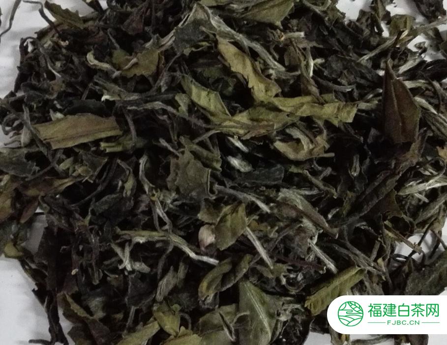 老白茶是什么茶