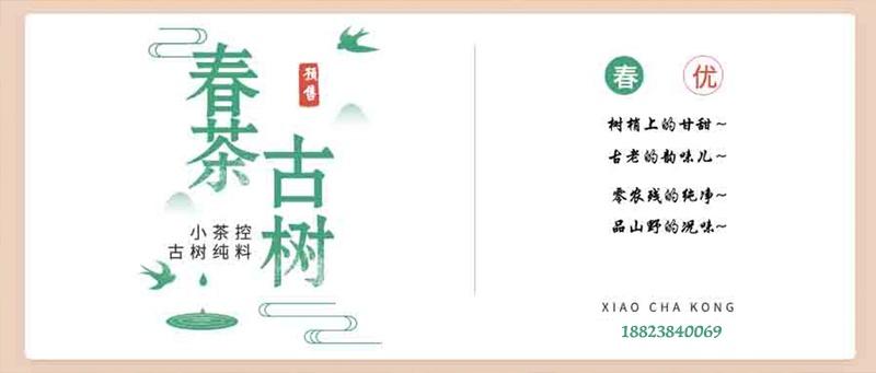 """古树春茶才刚开始采摘之际 简单聊聊古茶树.临沧茶.""""茶之九难""""和采摘法"""